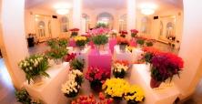 XVIII Wystawa Tulipanów