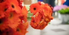 Wystawa Kwiatów w Galerii Amber w Kaliszu
