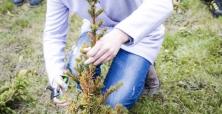 VII Zasady Cięcia Drzew i Krzwów Ozdobnych