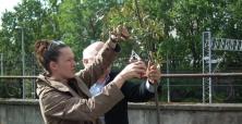 X Zasady Cięcia Drzew i Krzewów Ozdobnych