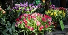 XXI Wystawa Tulipanów