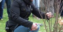 II Zasady Cięcie Drzew i Krzewów Ozdobnych