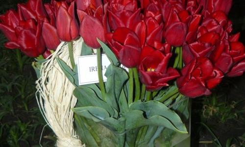 XIV Wystawa Tulipanów
