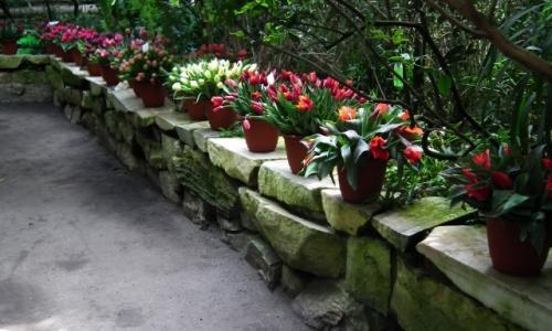 XVI Wystawa Tulipanów