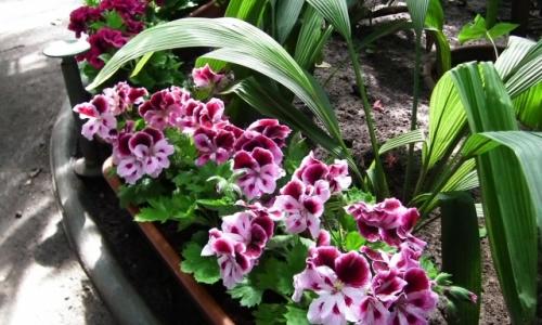 III Wystawa Kwiatów Rabatowo-Balkonowych