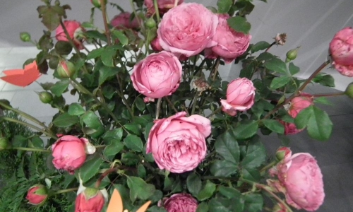 39. Wystawa Róż i Aranżacji Florystycznych