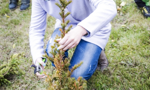 VII Zasady Cięcia Drzew i Krzewów Ozdobnych