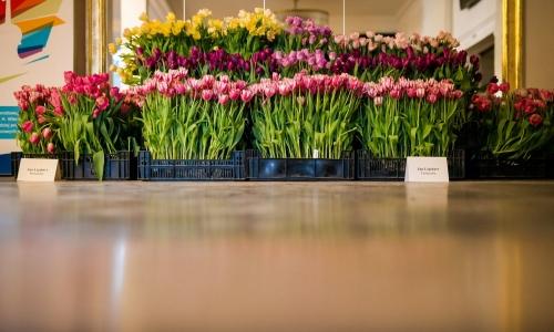 XX Wystawa Tulipanów