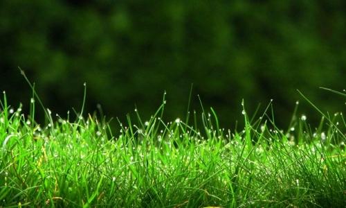 Trawniki w mieście
