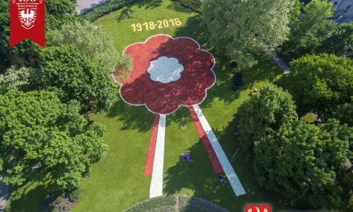 VI Poznańskie Dywany Kwiatowe